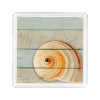 Moon Snail Acrylic Tray