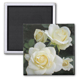 Moondance White Roses Keepsake Magnets