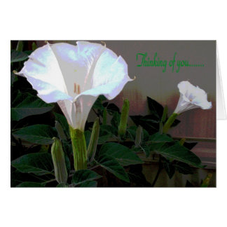 Moonflower Thinking of You Greeting Card