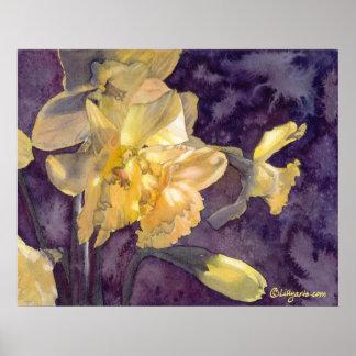 Moonlight Daffodils Watercolor Poster Print
