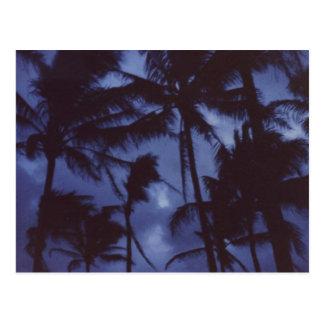 Moonlight PalmTrees Postcard