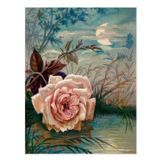 Moonlight Rose Postcard
