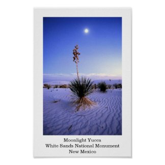Moonlight Yucca Poster
