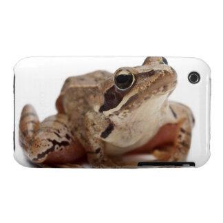 Moor Frog - Rana arvalis iPhone 3 Case-Mate Cases