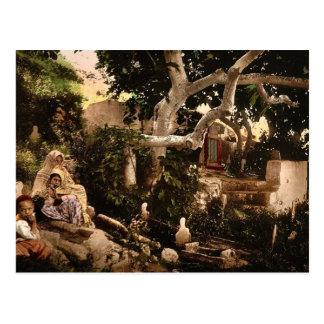 Moorish family in the cemetery, Algiers, Algeria v Postcard