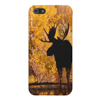 Moose (Alces Alces) Bull In Golden Willows 2 iPhone 5/5S Case
