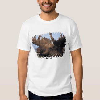 moose, Alces alces, bull with large antlers in 2 T Shirts