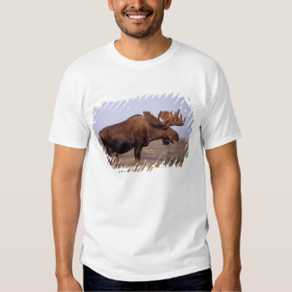 moose, Alces alces, bull with large antlers in T Shirt