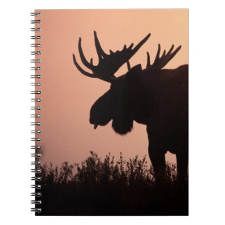 moose, Alces alces, bull with large antlers, Spiral Note Book