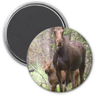 Moose Animal Forest Peace Love Destiny Magnet