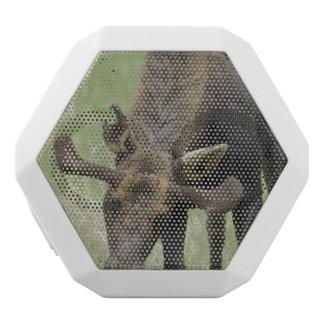 Moose White Boombot Rex Bluetooth Speaker