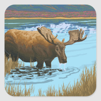 Moose Drinking at Lake - Yellowstone National Square Sticker