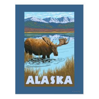 Moose Drinking Water Vintage Travel Poster Postcard