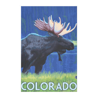 Moose in MoonlightColorado Canvas Print