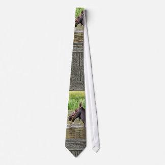 Moose in water tie