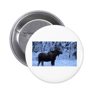 Moose loose in the snow pinback buttons