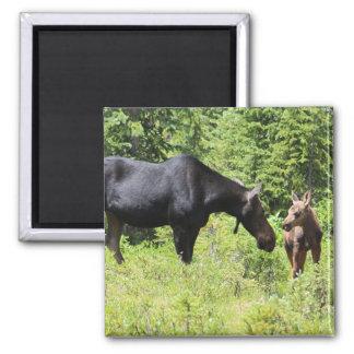 Moose Mom And Calf Magnet