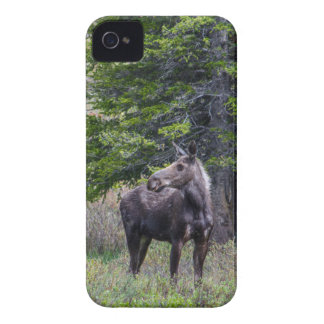 Moose Mother Case-Mate iPhone 4 Case
