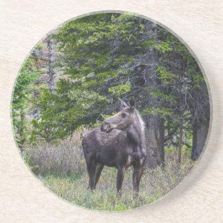 Moose Mother Coaster