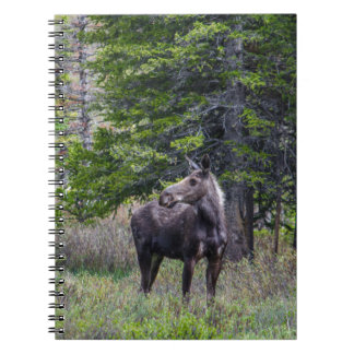 Moose Mother Notebook