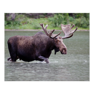 Moose on a Mission Poster