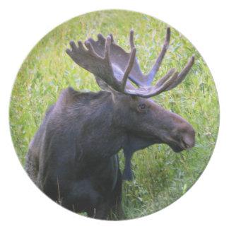 Moose photograph 1 plate