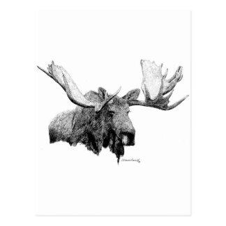 Moose Postcard