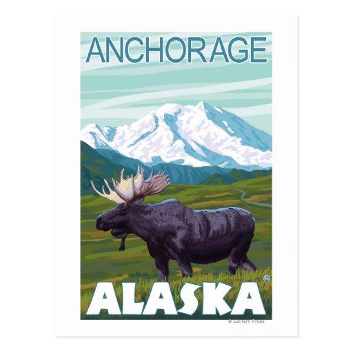 Moose Scene - Anchorage, Alaska Postcards