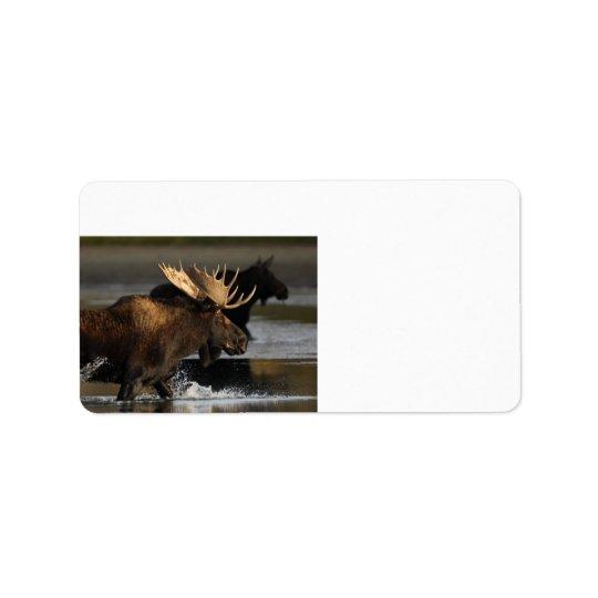 moose splashing in the water label