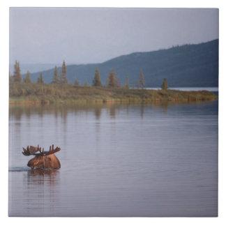 Moose Swimming in Lake Tile