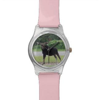 Moose Watch 1