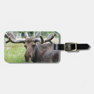 Moose WTF Bag Tags