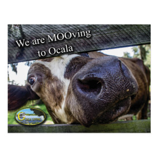 Mooving to Ocala Postcard