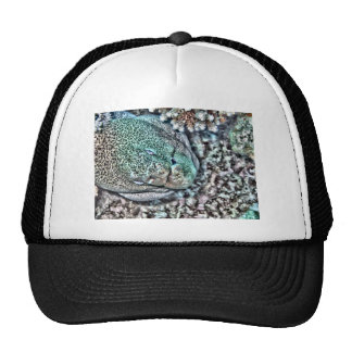 Moray Eel face Cap