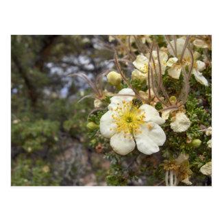 More Flowers in Hawaii Postcard