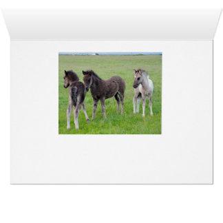More Horses Galore (Horizontal) Card