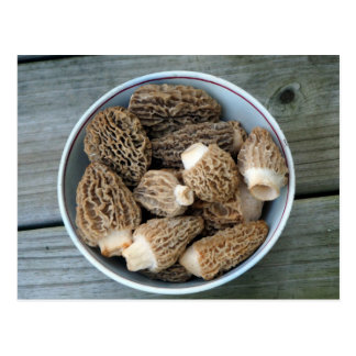 Morel Mushrooms Birthday Postcard