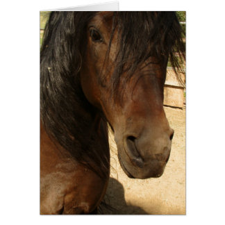 Morgan Horse Beauty Card