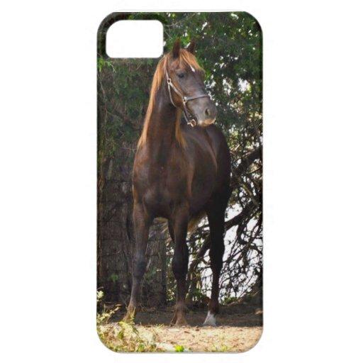 Morgan Horse iPhone 5/5S Cases