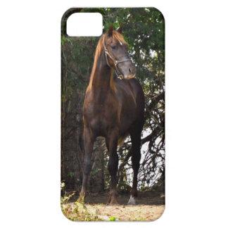Morgan Horse iPhone 5 Case
