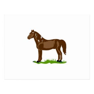 Morgan Horse Postcard