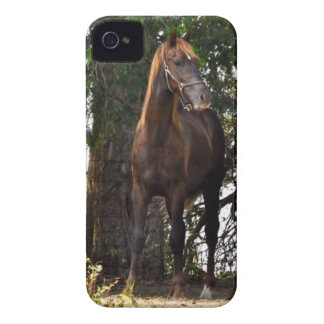Morgan Horse Products!! iPhone 4 Cases