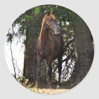 Morgan Horse Products!! Classic Round Sticker
