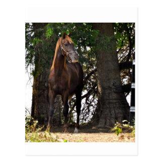 Morgan Horse Products!! Postcard