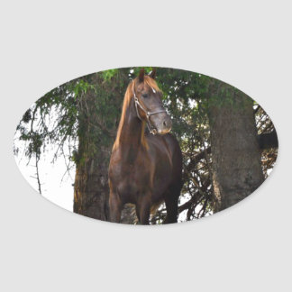 Morgan Horse Sticker