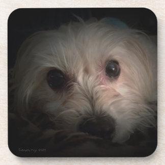 Morkie Dog Puppy Cute Rescue Coaster