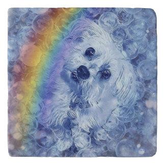 Morkie Dog Rainbow Bubbles Marble Stone Trivet