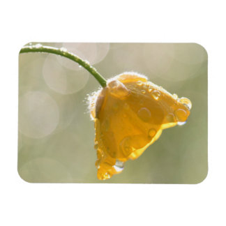 Morning Buttercup Magnet