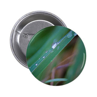 Morning Dew Button