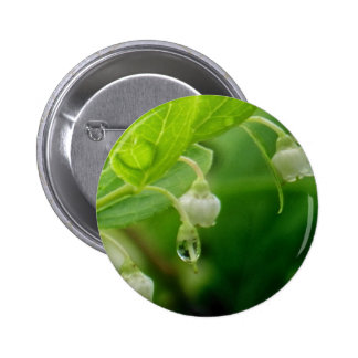 Morning Dew Buttons